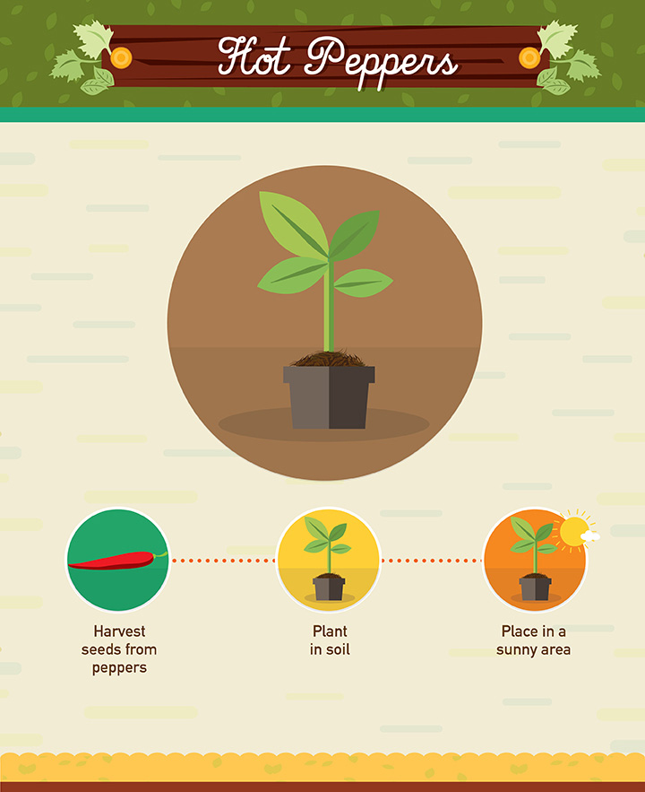 Hot Peppers - Regrow your left over fuit and vegetables