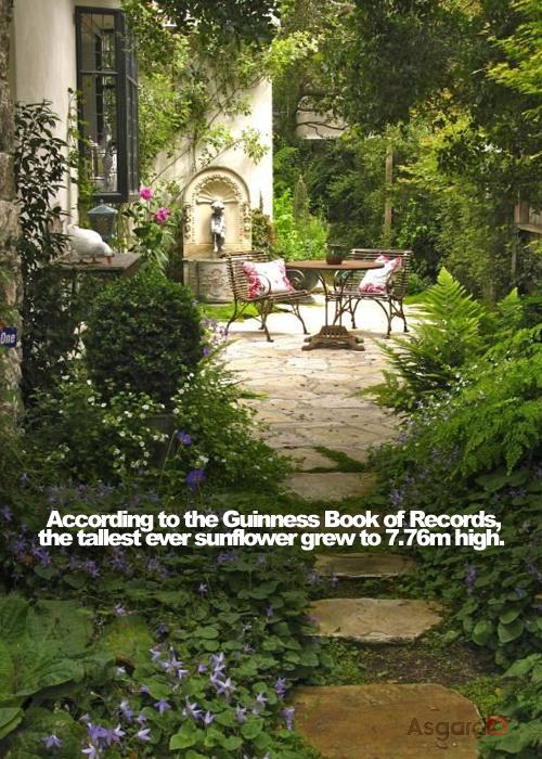 Garden Facts 01