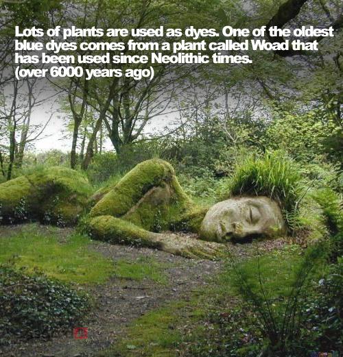 Garden Facts 02