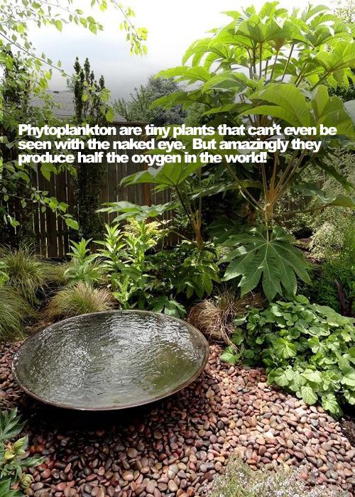 Garden Facts 03