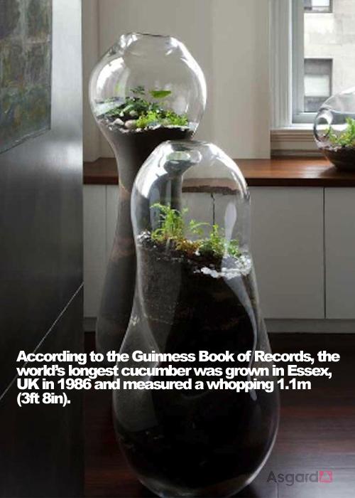 Garden Facts 04