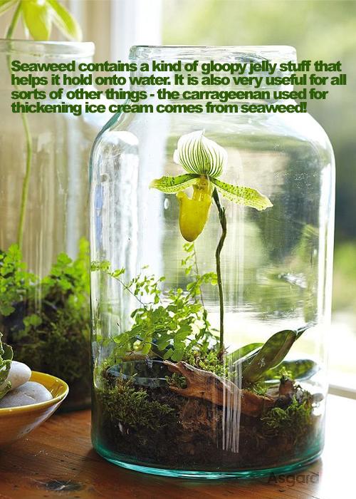 Garden Facts 06