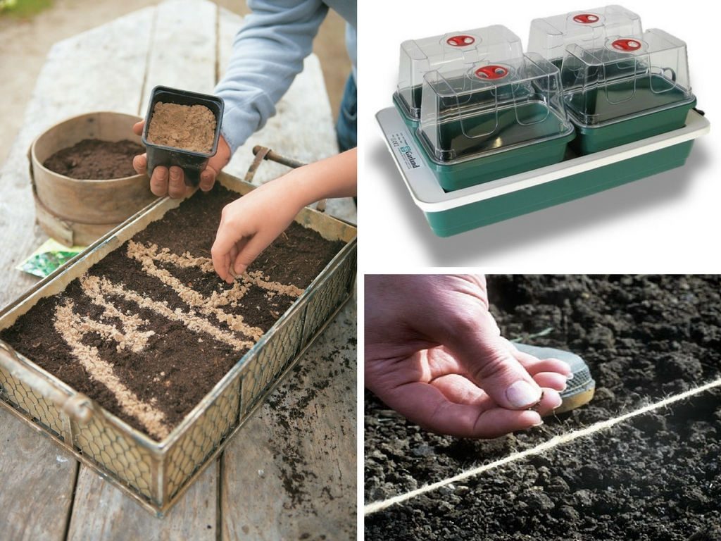 Garden Organic - Germinating seeds