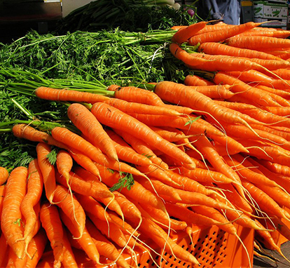 Garden grown Carrots
